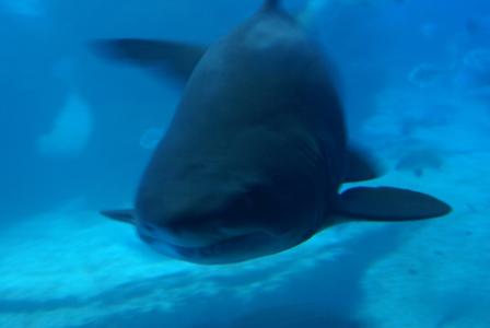 Palma Aquarium auf Mallorca - Staunen zwischen Haien, Fischen und Algen (09116) Foto: ©Carstino Delmonte (2009)