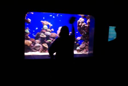 Palma Aquarium auf Mallorca - Staunen zwischen Haien, Fischen und Algen (09010) Foto: ©Carstino Delmonte (2009)  Palma Aquarium auf Mallorca - Staunen zwischen Haien, Fischen und Algen (09010) Foto: ©Carstino Delmonte (2009)