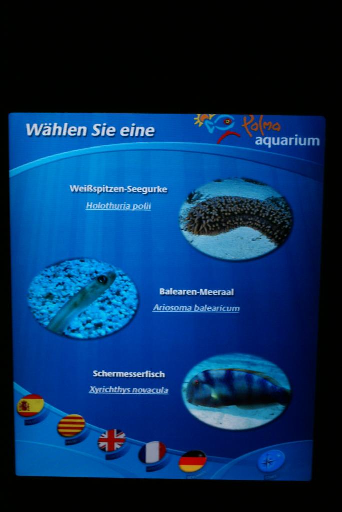 Palma Aquarium auf Mallorca - Staunen zwischen Haien, Fischen und Algen (09026) Foto: ©Carstino Delmonte (2009)