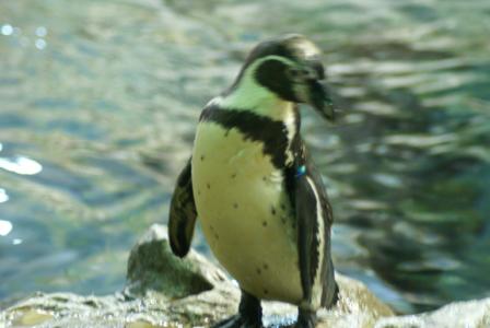 Teneriffa - Loro Parque: Flora, Fauna, wilde Tiere und Delfinshows Foto: ©Carstino Delmonte (2009)