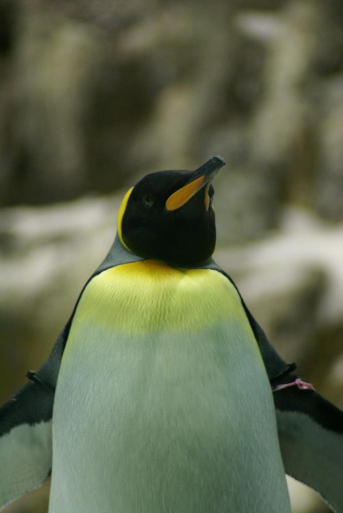 Teneriffa - Loro Parque: Flora, Fauna, wilde Tiere und Delfinshows (09271) Foto: ©Carstino Delmonte (2009)