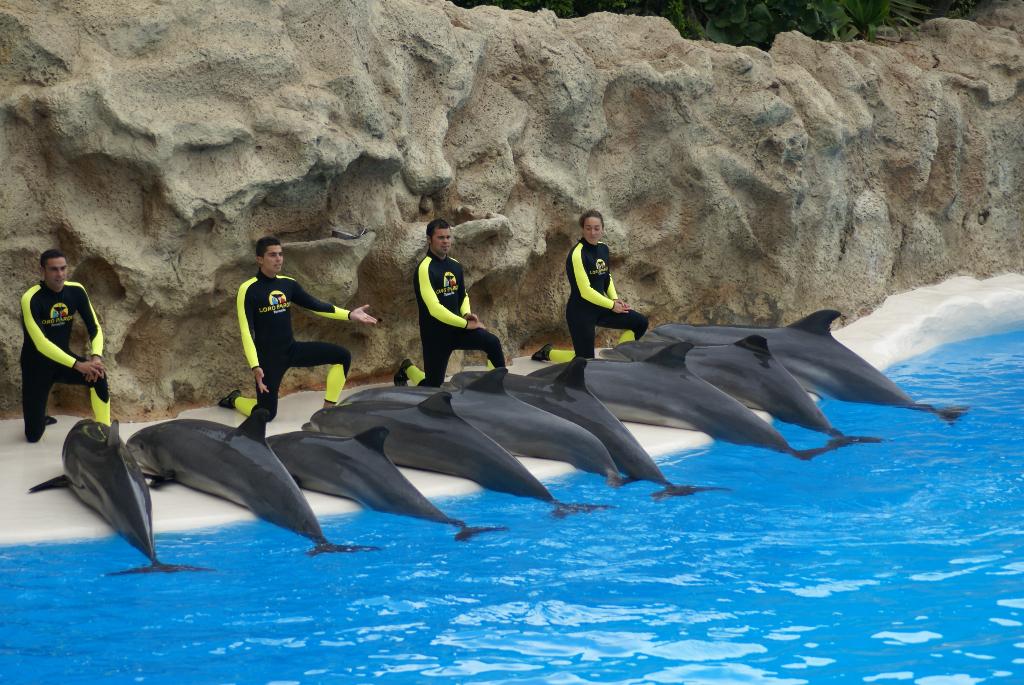 Teneriffa - Loro Parque: Flora, Fauna, wilde Tiere und Delfinshows (09417) Foto: ©Carstino Delmonte (2009)