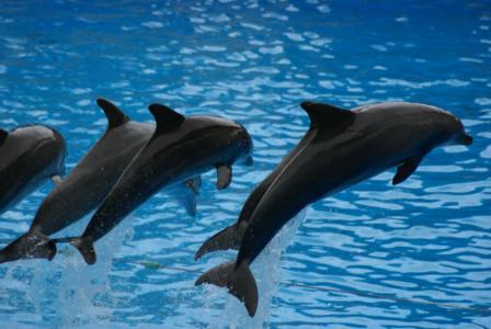 Teneriffa - Loro Parque: Flora, Fauna, wilde Tiere und Delfinshows (09447) Foto: ©Carstino Delmonte (2009)