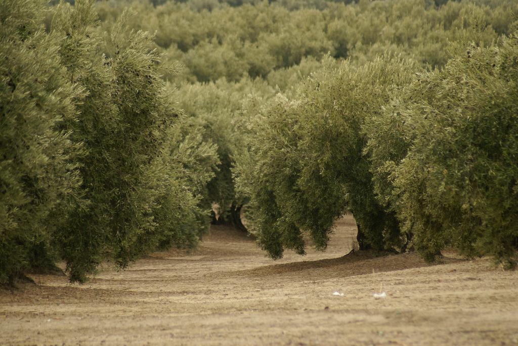 Jaén – Spanien Provinz der Olivenhaine