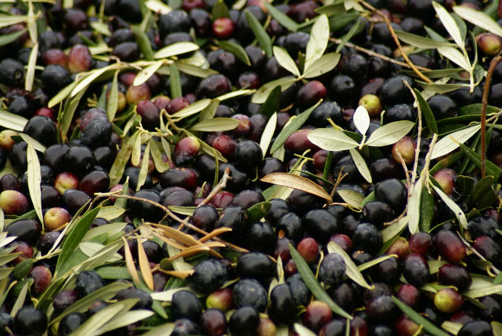 Jaén - 60 Millionen Olivenbäume