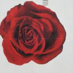 A-Rosa (Arkona AG)