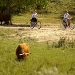 Der Sommer ist perfekt geeignet, um sich auf das Fahrrad zu schwingen
