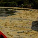 Chennai wappnet sich für den Klimawandel: KfW unterstützt nachhaltiges Regenwassermanagement