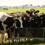 Spanien: Von Schafen, Kühen und Käse in Navarras Hochebenen