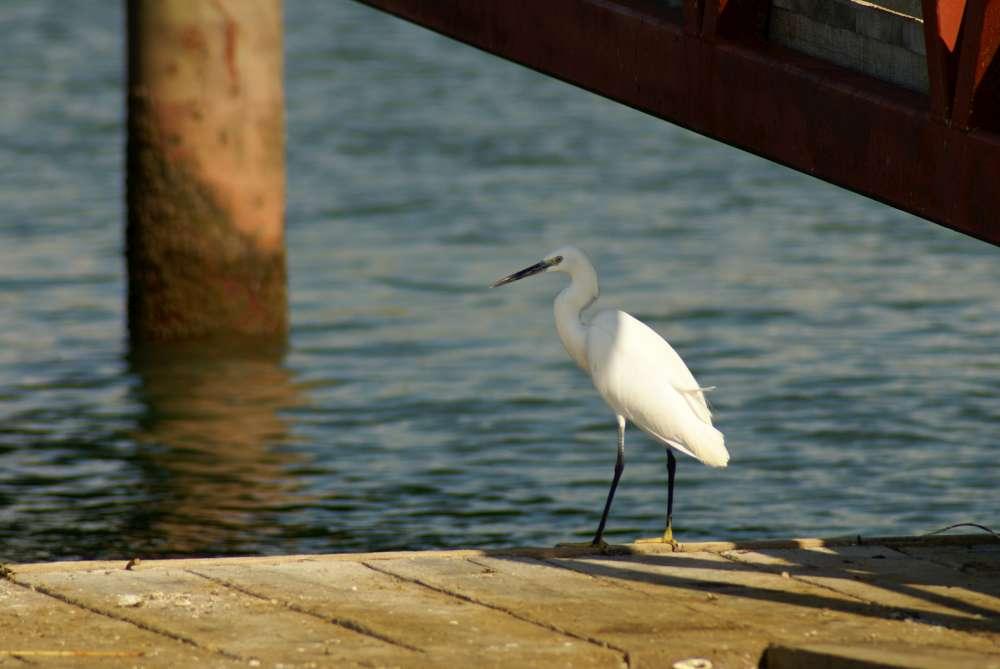 Am Neusiedler See haben schon die ersten Störche ihr Saison-Quartier bezogen
