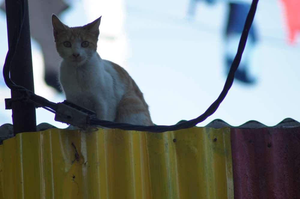 Tiere aus dem Ausland mit nach Hause nehmen: Auf gesetzliche Bestimmungen achten