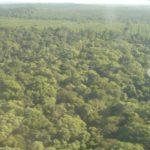 Philippinen - Vielfalt im Regenwald