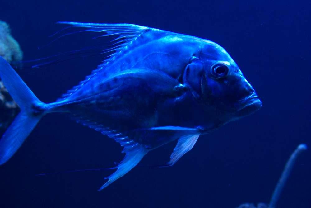 Ein Meeresgedicht – das neue Aquarium von Gran Canaria