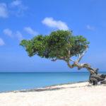 Bei den jährlichen Auszeichnungen der TripAdvisor Traveller's Choice Awards findet sich Aruba gleich in mehreren Kategorien wieder.