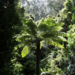 Wo Reisende das Gewissen ein wenig beruhigen können: Einen Baum pflanzen in Neuseeland