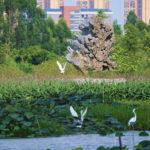 Millionenstadt Dongguan ruft Malwettbewerb für junge Menschen in Europa aus