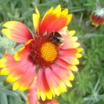Mehr als jeder zweite Honig aus deutschen Supermärkten mit Pestiziden belastet . BUND fordert Ausstiegsplan für Ackergifte.
