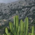 Schlangen auf Mallorca